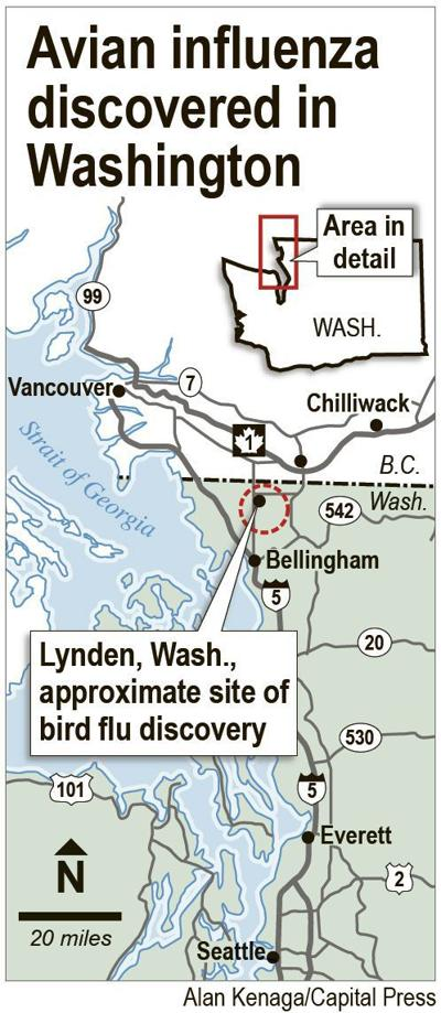 Wild duck, captive falcon infected with bird flu in Washington
