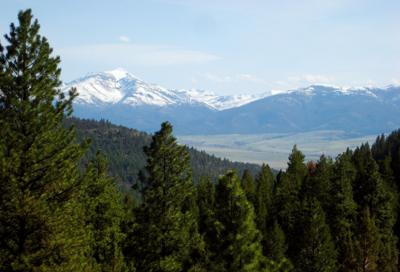 Forest Service to reveal final draft of revised Blue Mountains plan