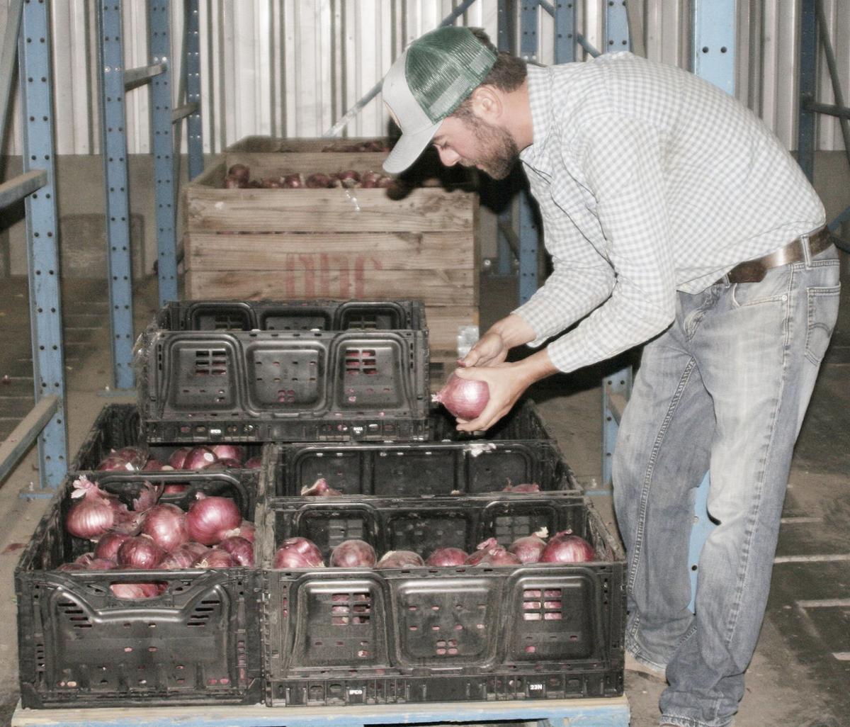Red Walla Walla sweet onions 10 years in the making