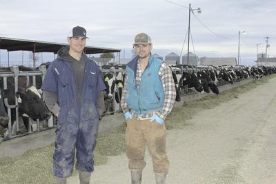 Brothers start dairy of their own