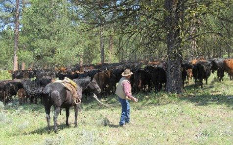 Southworth Brothers Ranch receives national award