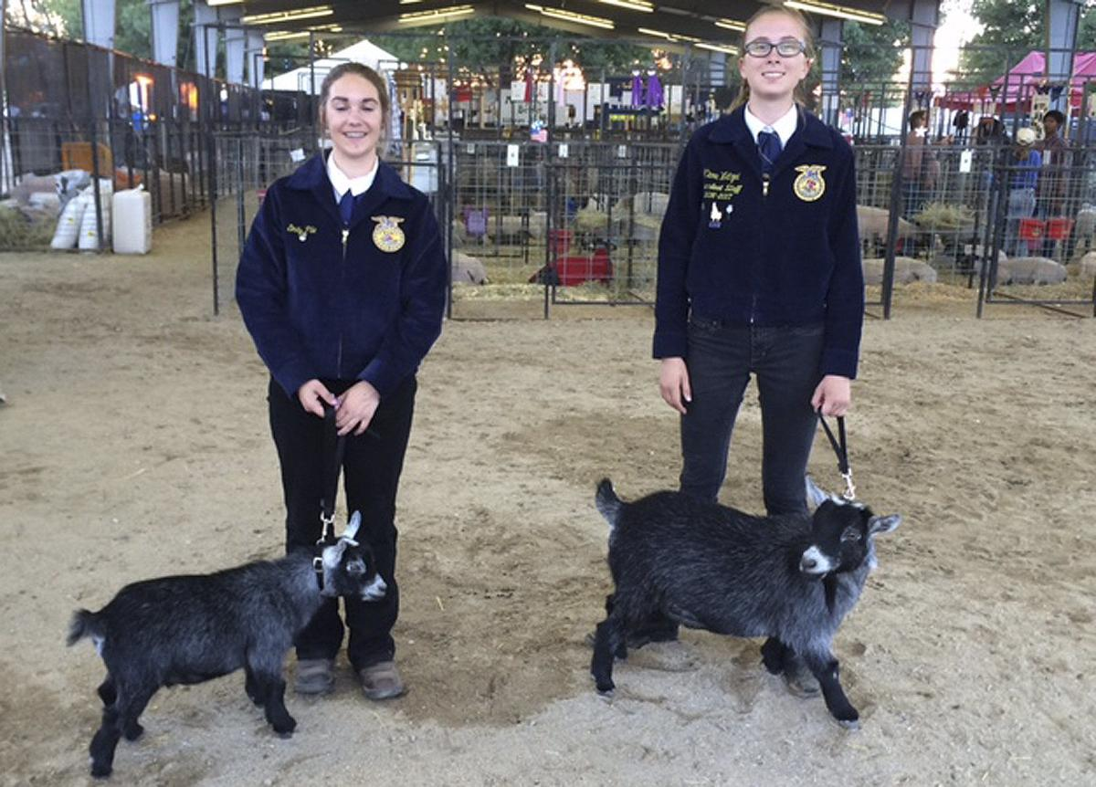 Meridian FFA showcases SAEs at Western Idaho Fair | FFA/4-H