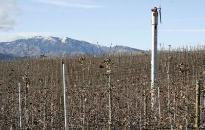 Growers assess freeze damage