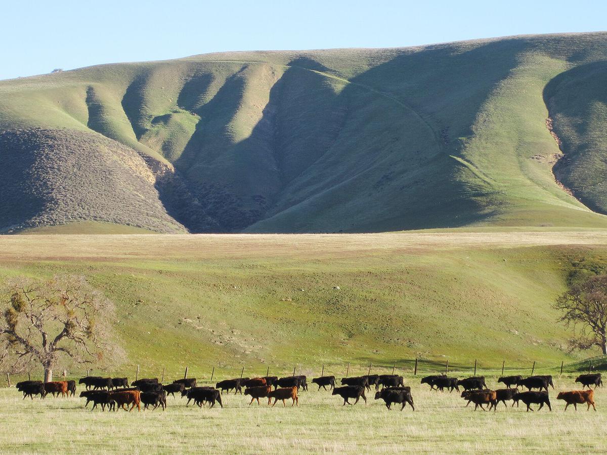 Rangeland grazing