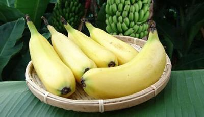 Banana with edible skin can grow anywhere