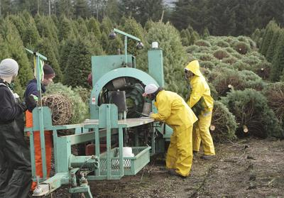 Christmas tree growers narrowly approve checkoff