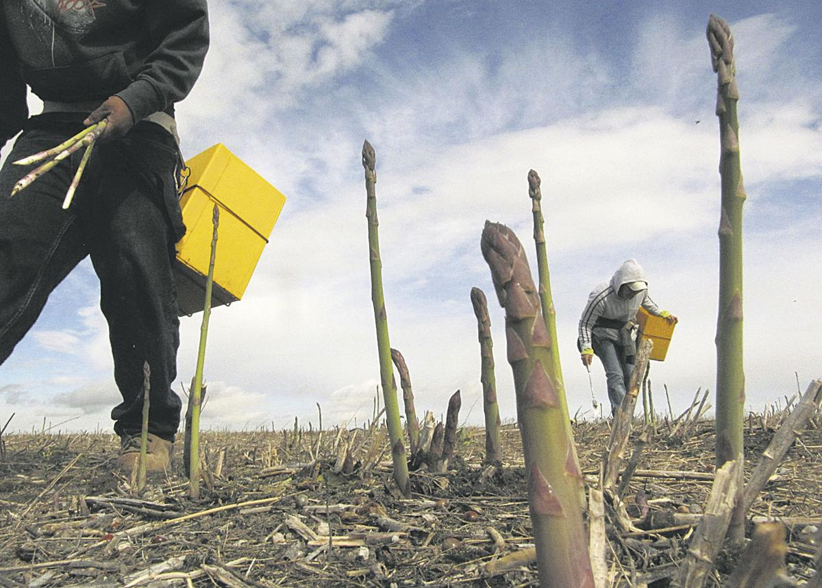US asparagus industry sees slight recovery