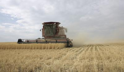 NASS: Winter wheat production down this year