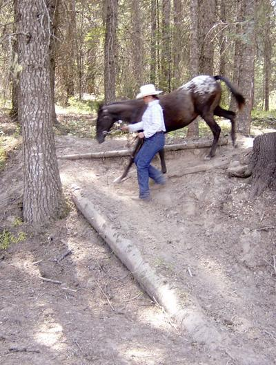 Think ahead to stay safe around horses