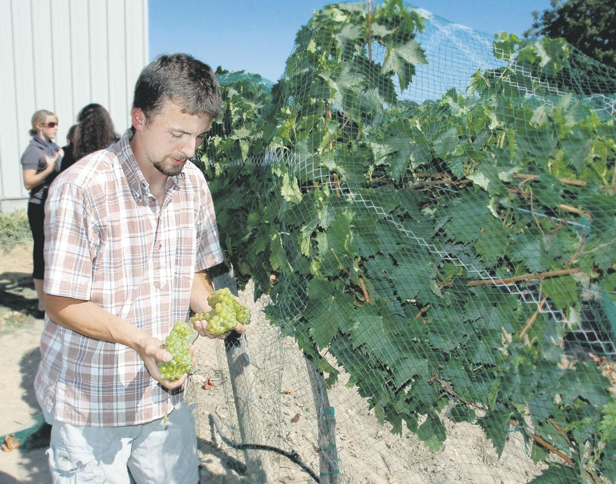 Idaho wine comes to attention
