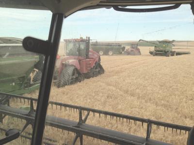 Washington farmer wins national wheat yield contest
