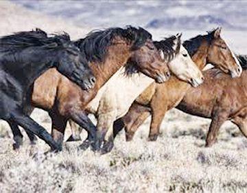 Judge: Oregon emergency horse roundup violated law