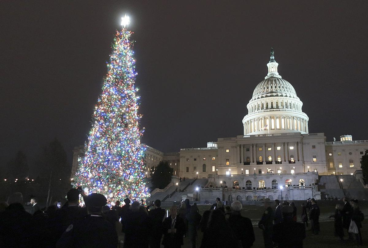 Capitol Christmas Tree.Oregon Christmas Tree Takes Its Place At U S Capitol