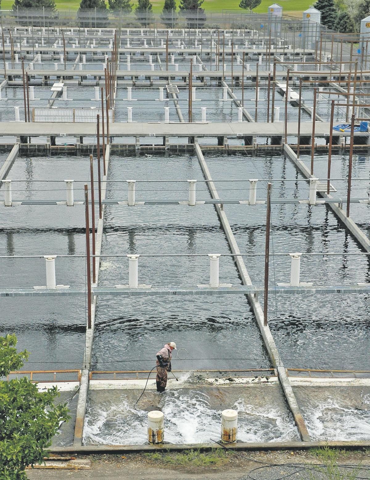 Water shortage bogs down trout farms