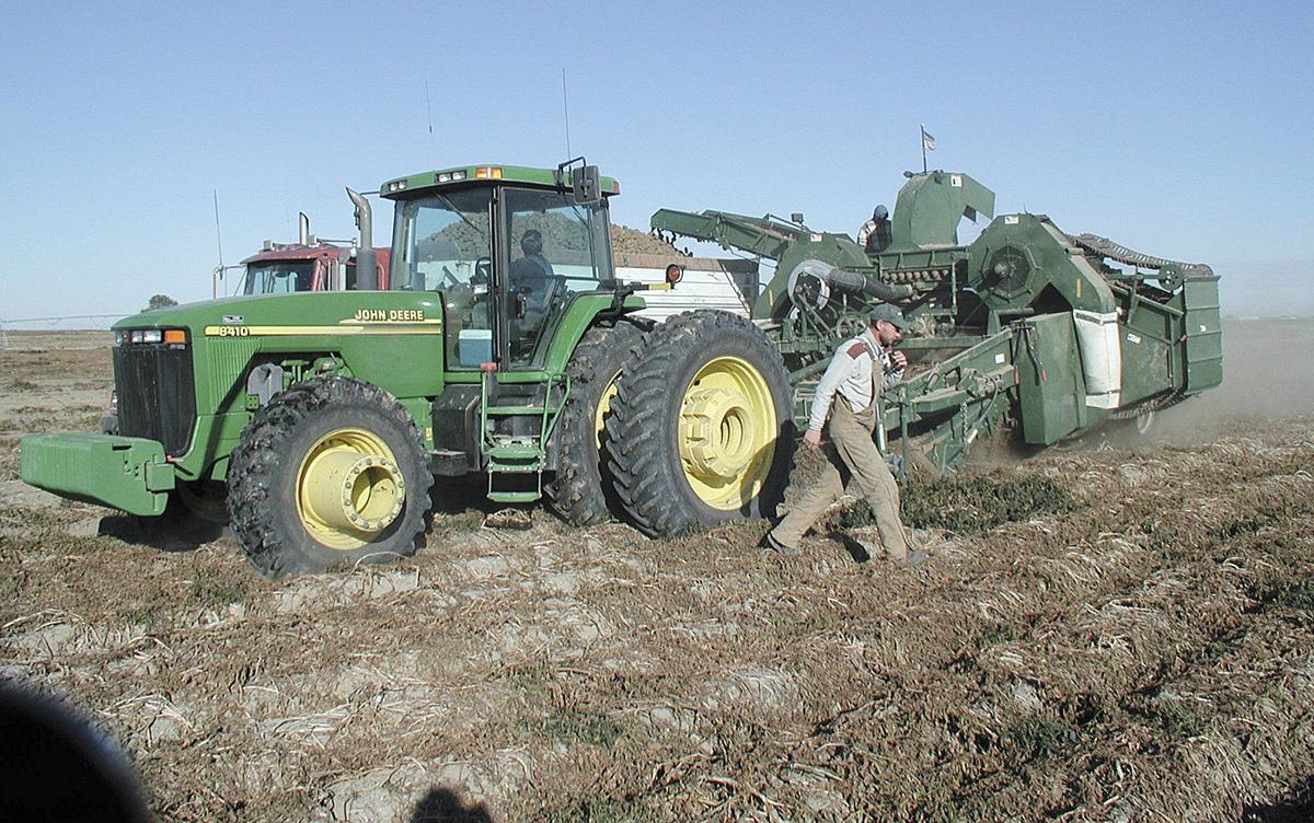 Washington potato harvest