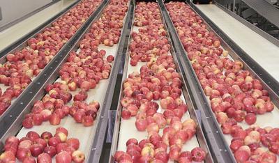 Mexican growers allege Washington apple dumping   Washington