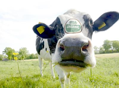 Animal welfare groups join lawsuit over USDA organic rules