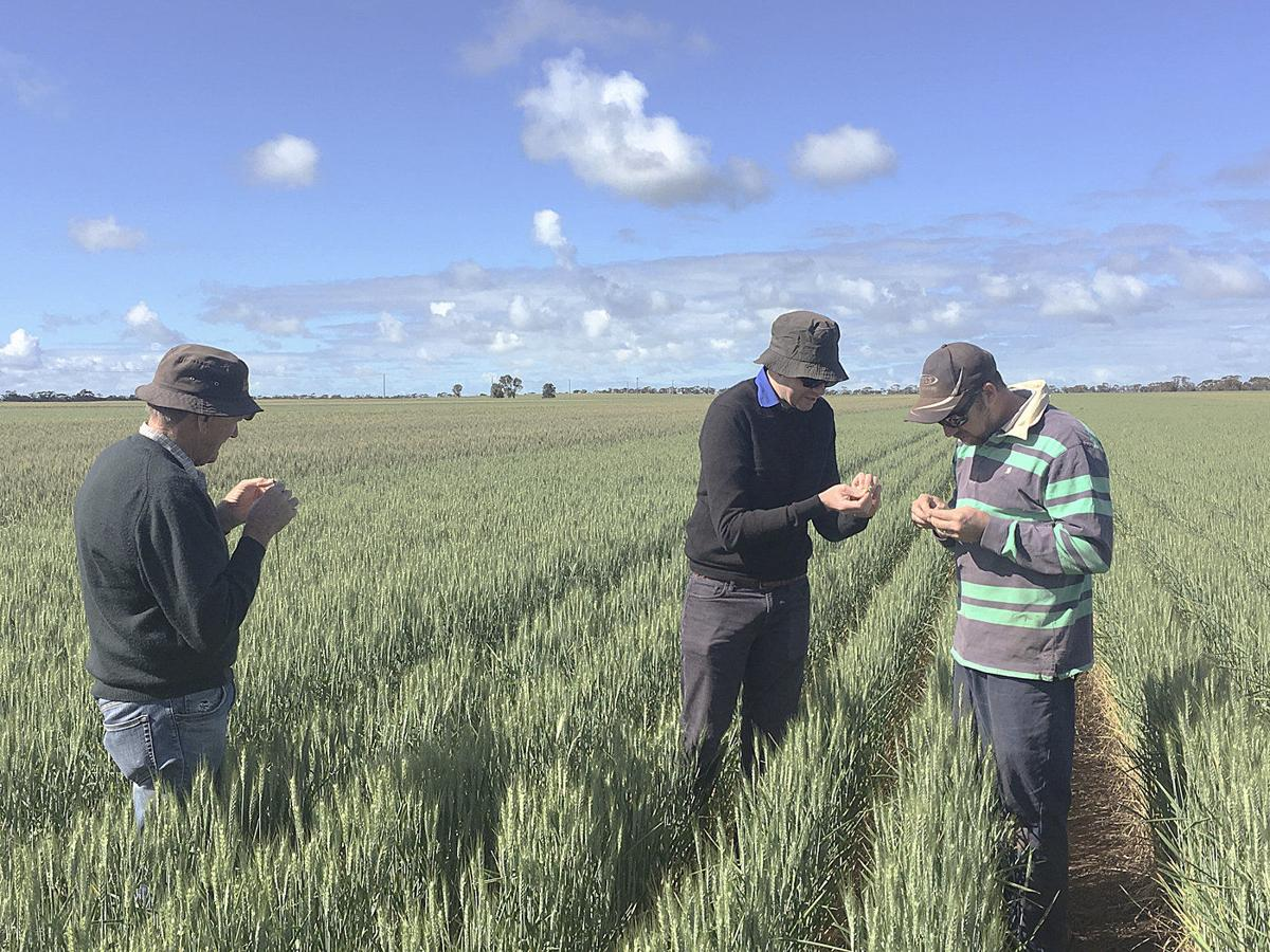 Australian researcher to discuss dryland wheat farming