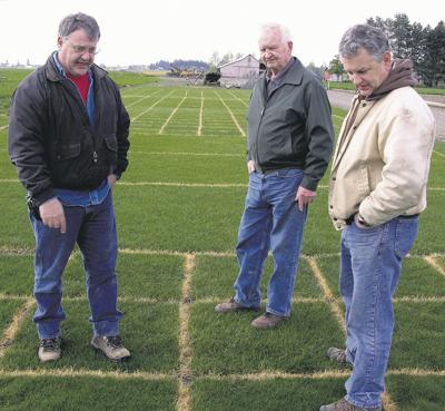 Ryegrass cultivar surprises growers