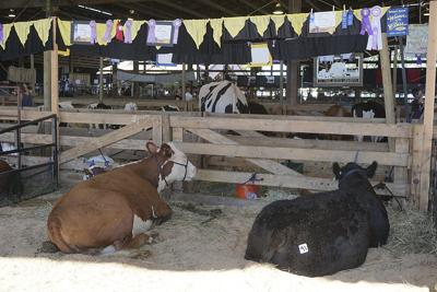 Marion County Fair set for its annual four-day run