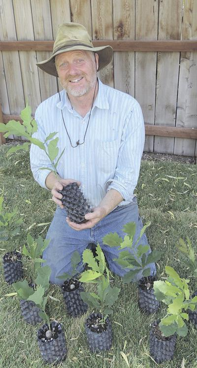 Nursery grows from tiny acorns