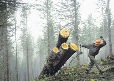 Timber prices start to rally