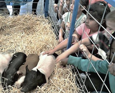 FFA Ag Expo offers valuable lessons for young and old