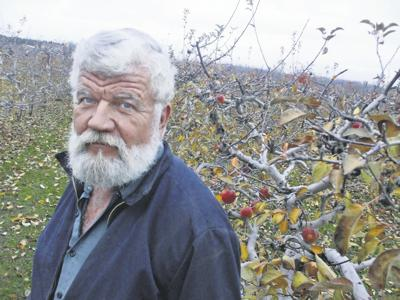 As prices drop, apples stay on trees