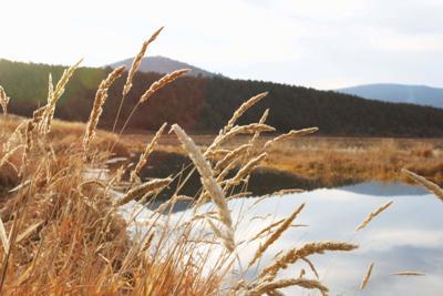 Wetlands in Klamath Basin
