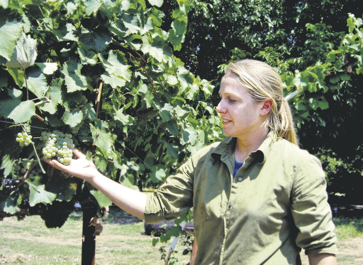 Wine flows on despite recession