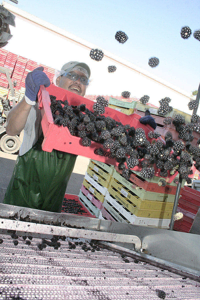Tiegs expands frozen fruit business with purchases | Idaho