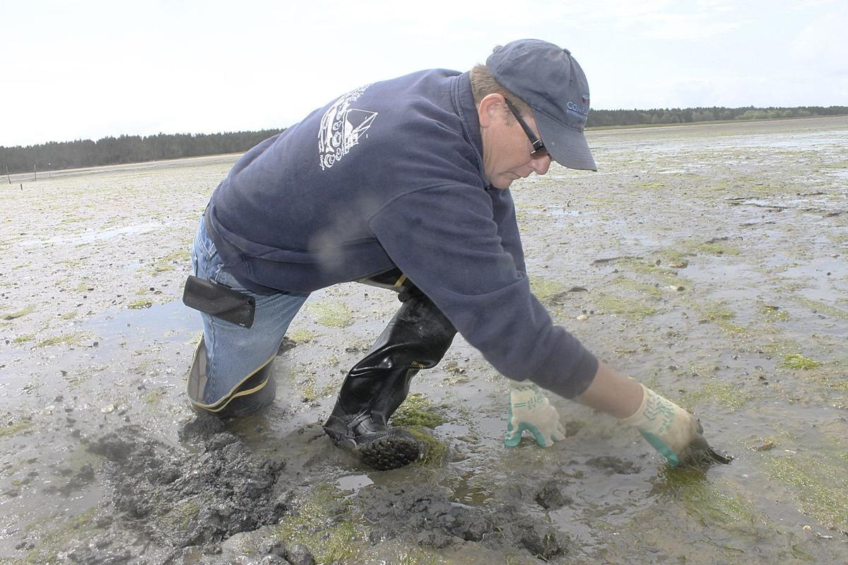 Shellfish farmers lick wounds, hire PR help