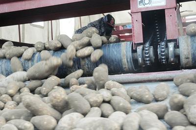 U.S. potato sales