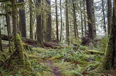 210319_cp1_news_dj DNR forests