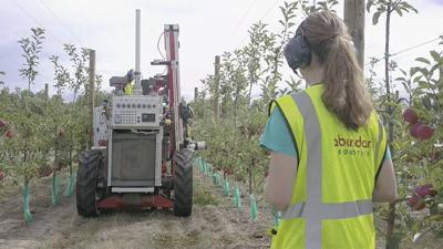 Robotic apple pickers 6
