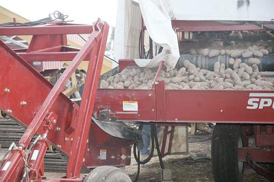 Idaho spud prices drop near production cost