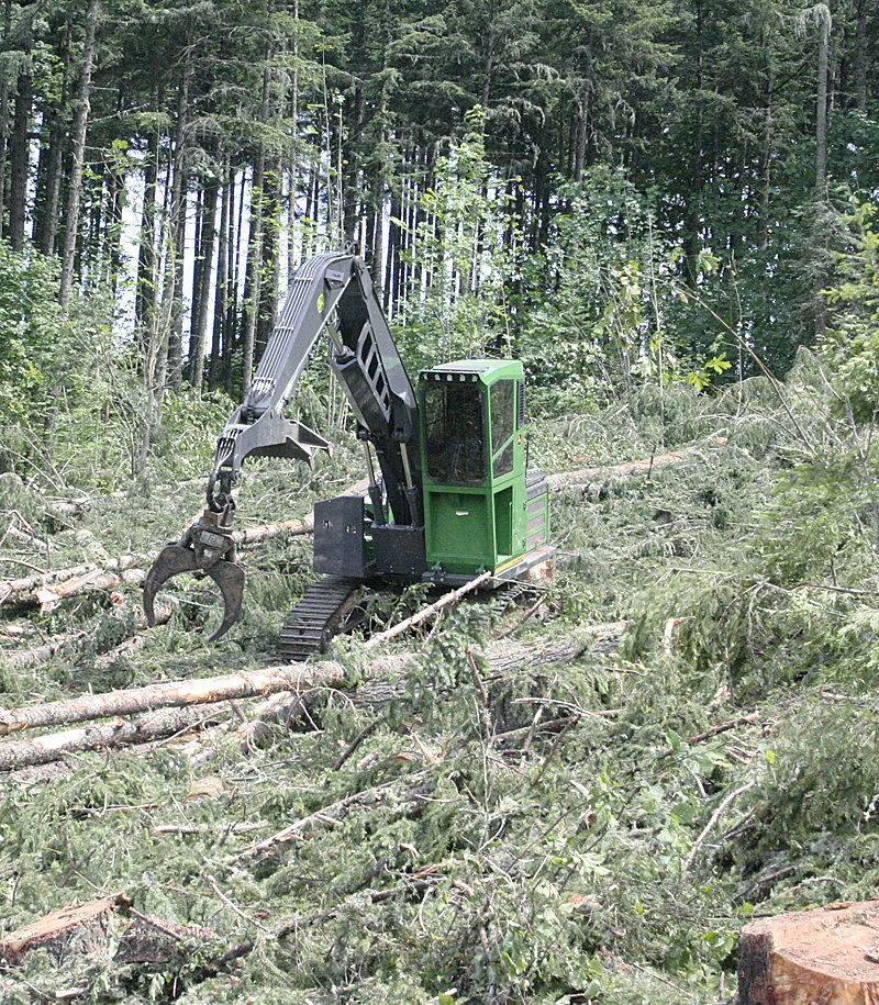 Multiple factors cause log price surge