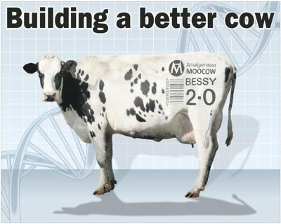 Genetics help quest for improved dairy cows