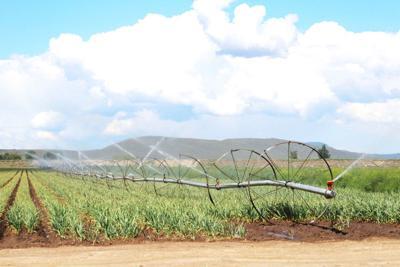 Klamath drought