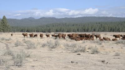 Editorial: Ranchers get a biological ultimatum