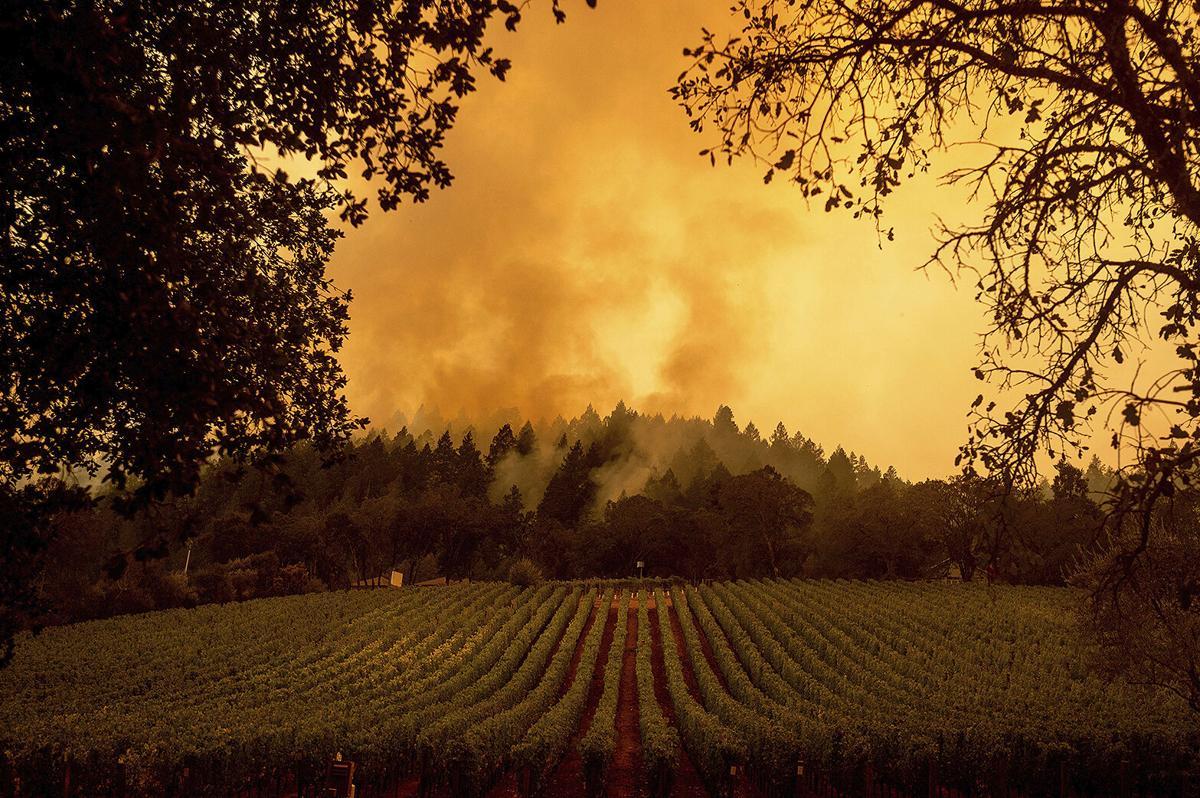 California wildfires vineyard smoke