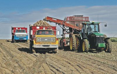 Rural areas fear loss of crop