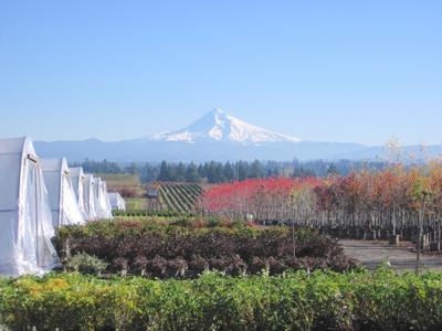 Oregon nursery