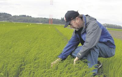 Flax sees revival in new role as rotation crop