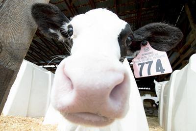 Dairy West fundraiser