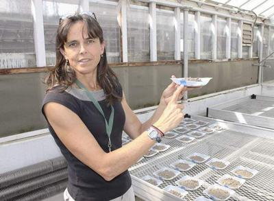 WSU scientist searches for seeds of success