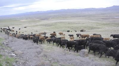 Brothers raise cattle for high desert