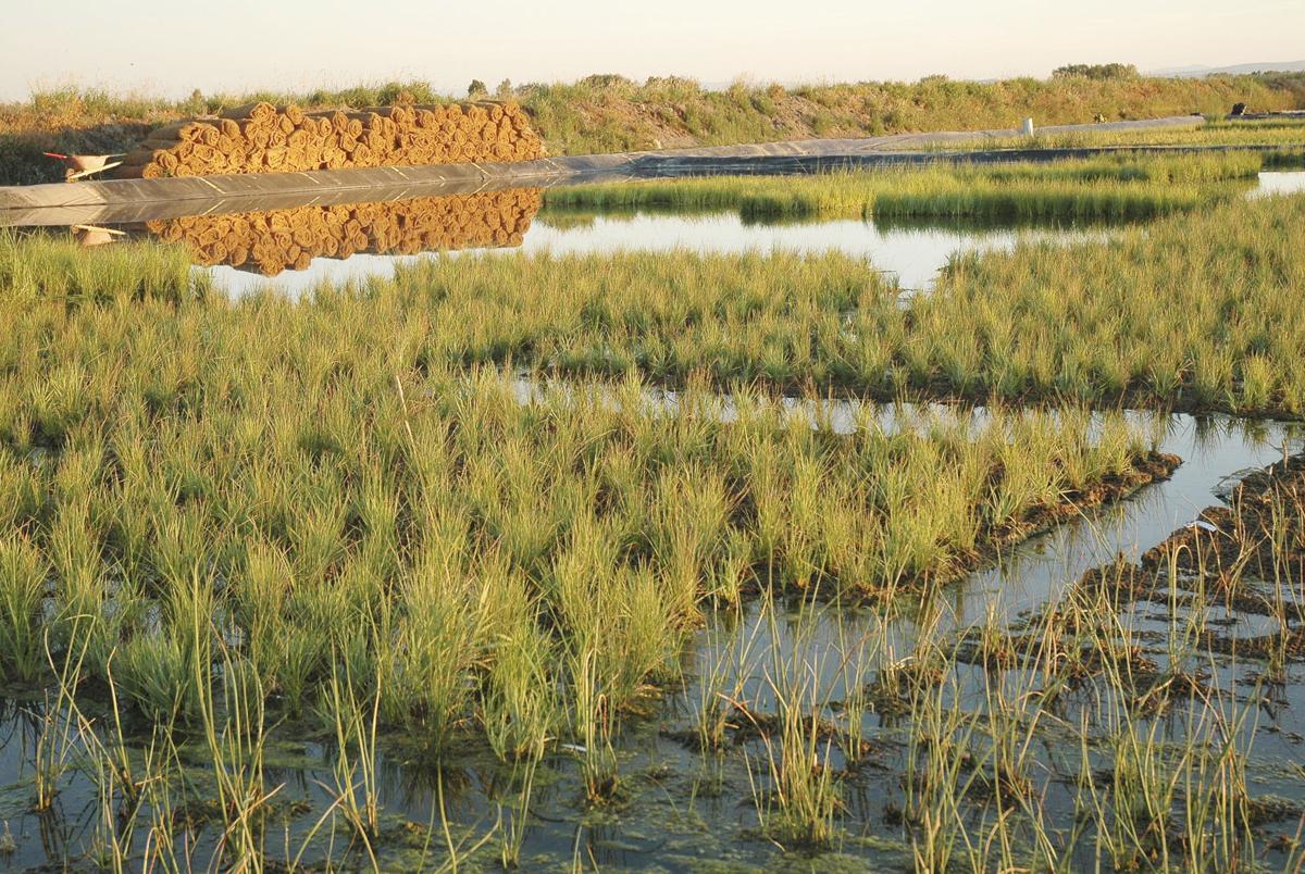 Pre-vegetated mats, logs control erosion, restore wetlands