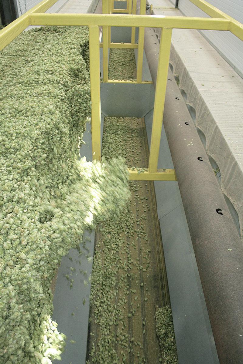 Hops set acreage, production value records
