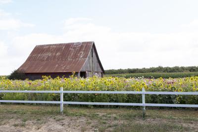 SM farmland.jpg